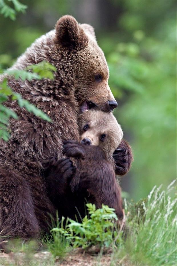 mama-bear-is-hugging-her-cub